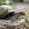 Chris Green - Snail