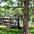 Kathy  White - Spanish Moss Overlooking...