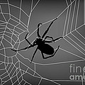 Dave Gordon - Spider Web With Spider