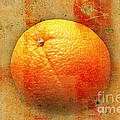 Andee Photography - Still Life Orange...