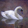 Mark Richards - Swan in Pond