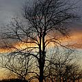 Jerry Weinstein - Tree at Sunset
