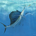 Kevin Brant - Two Of A Kind Sailfish
