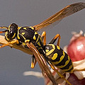 Michael Flood - Wasp On Garlic
