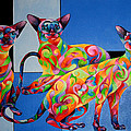 Sherry Shipley - We ARE Siamese if you...