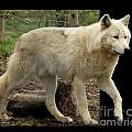 Deborah  Smith - White Wolf Stepping Out