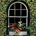 Bill Cannon - Window on an Ivy Covered...