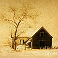 Barbara Henry - Wyoming Homestead