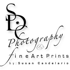 Fine Art Prints make great Christmas and Holiday Gifts