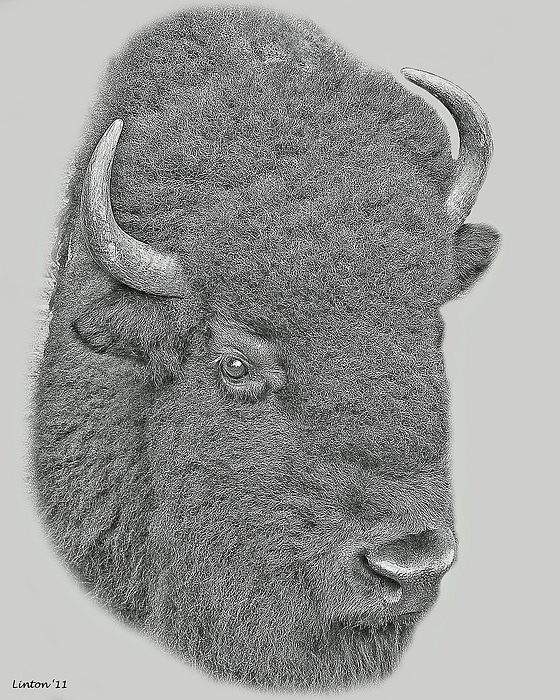 American Bison Digital Art