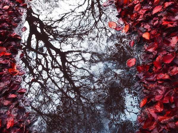 Autumn Reflections II Photograph
