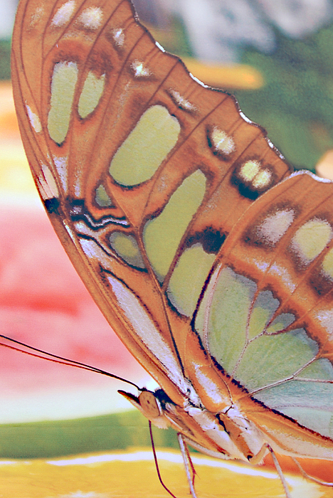 Golden Butterfly Photograph - Golden Butterfly by Don  Wright