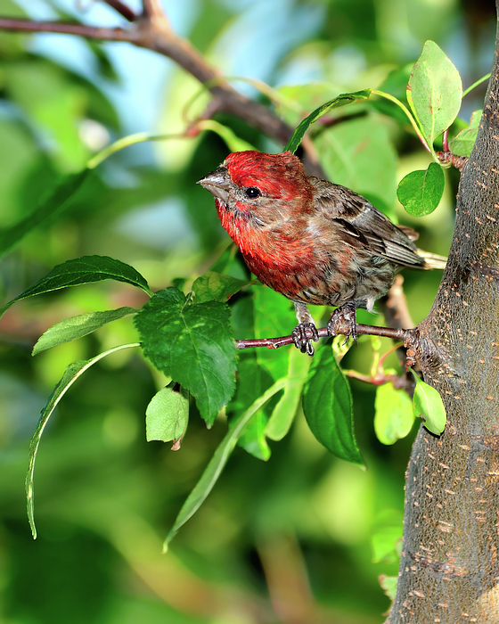 Finch Photograph - Inquisitive by Betty LaRue