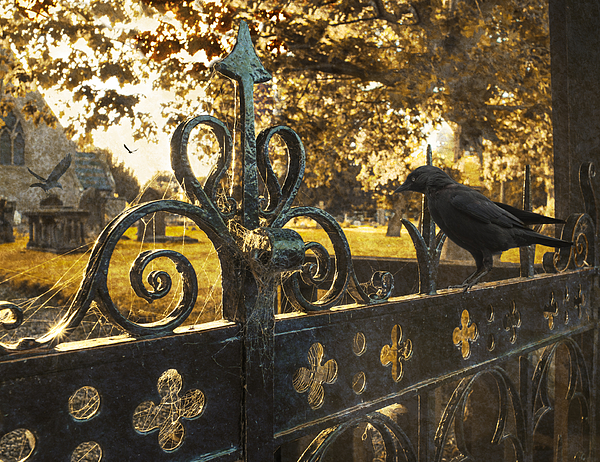 Cemetery Photograph - Jackdaw On Church Gates by Amanda And Christopher Elwell