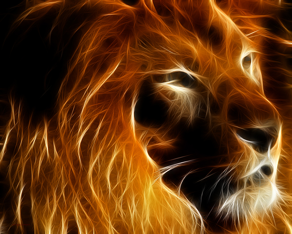 Lord Of The Jungle Photograph