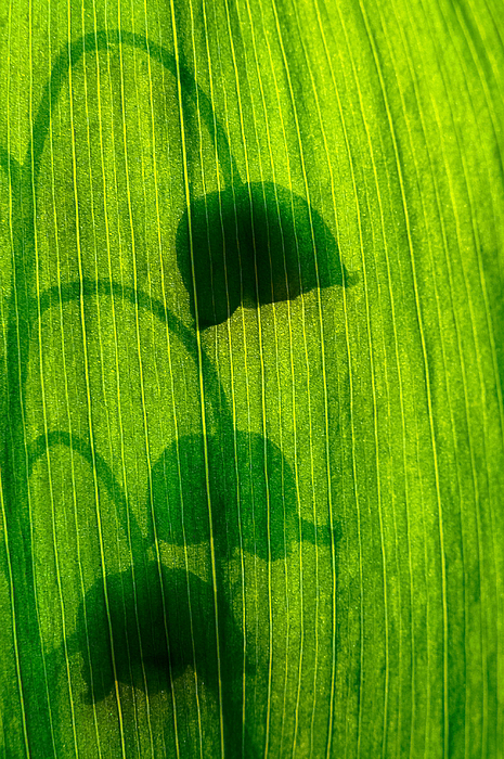 Nature Photograph - Shadow by Odon Czintos