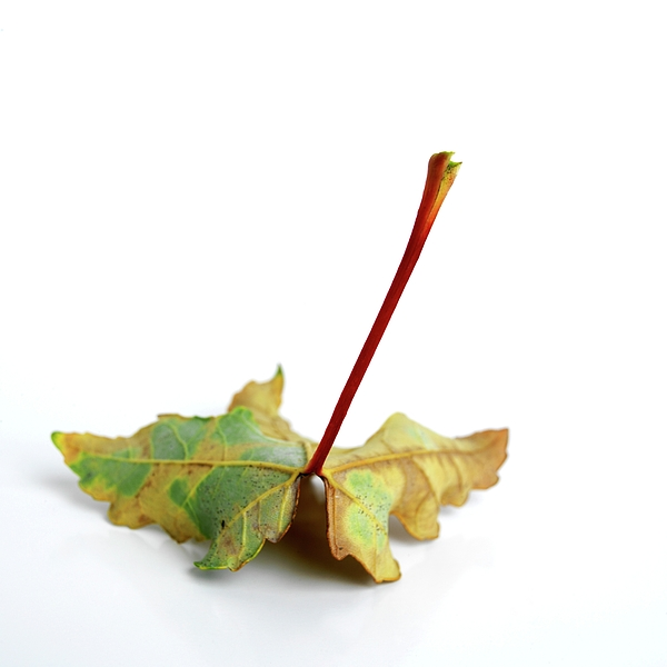 Autumn Photograph - Leaf by Bernard Jaubert