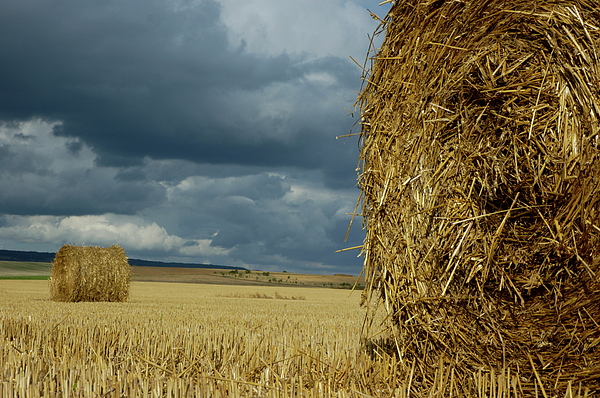 Hay Bales In Harvested Corn Field Photograph