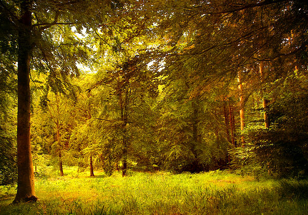 3d Photograph - Forest by Svetlana Sewell