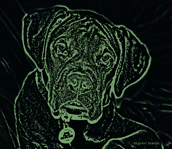 Boxer Digital Art - A Positive Negative by DigiArt Diaries by Vicky B Fuller