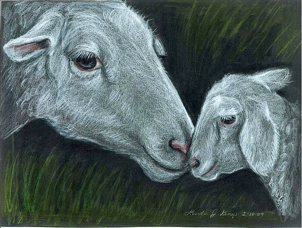 Sheep Drawing - Affectionate Nuzzle by Linda Nielsen
