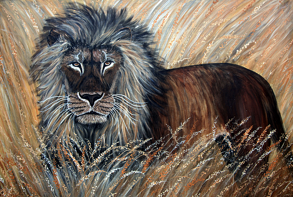 African Lion 2 Print by Nick Gustafson