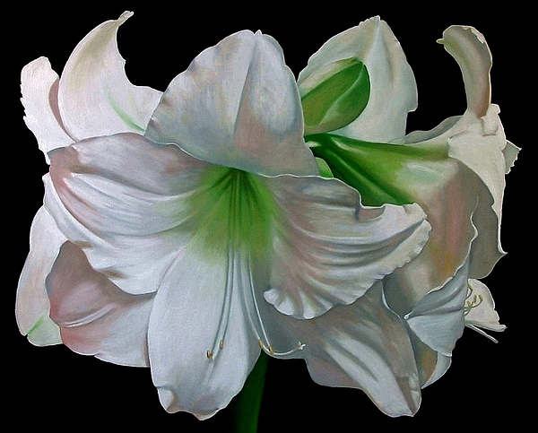 Doug Strickland Painting - Amaryllis by Doug Strickland