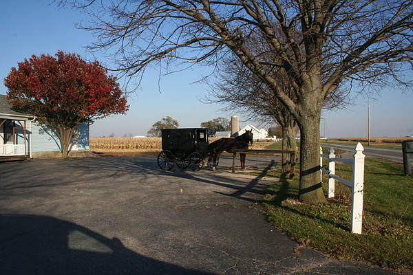 Horse Photograph - Amish 4 by Eric Irion