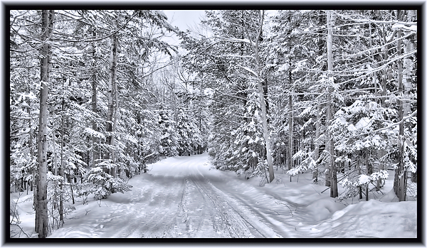 An isolated country lane in a frozen winter landscape with - Images of pine trees in snow ...
