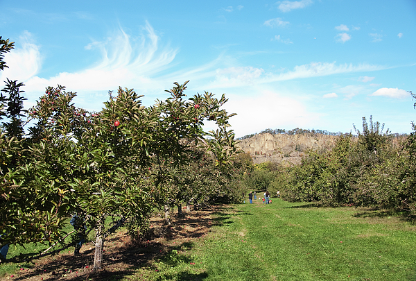 Apple Picking Photograph