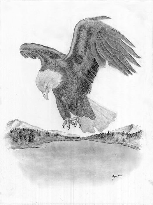 Bald Eagle In Flight Drawing by Russ Smith