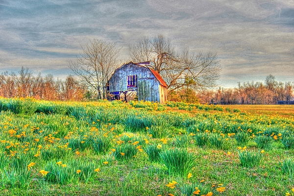 Barn Photograph - Barn In Field Of Flowers by Geary Barr