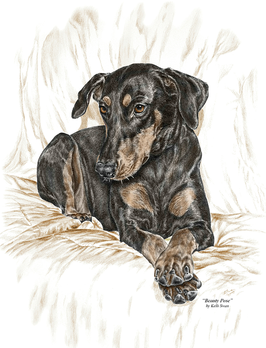Beauty Pose - Doberman Pinscher Dog With Natural Ears Drawing