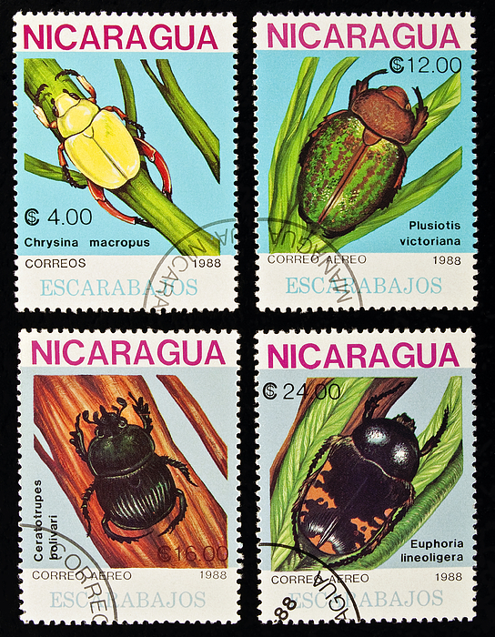 Beetle Photograph - Beetles Stamps Collection. by Fernando Barozza