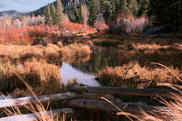 California Landscape Art Photograph - Big Meadow Creek Fall by Larry Darnell