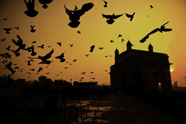 Horizontal Photograph - Birds In Flight At Gateway Of India by Photograph by Jayati Saha