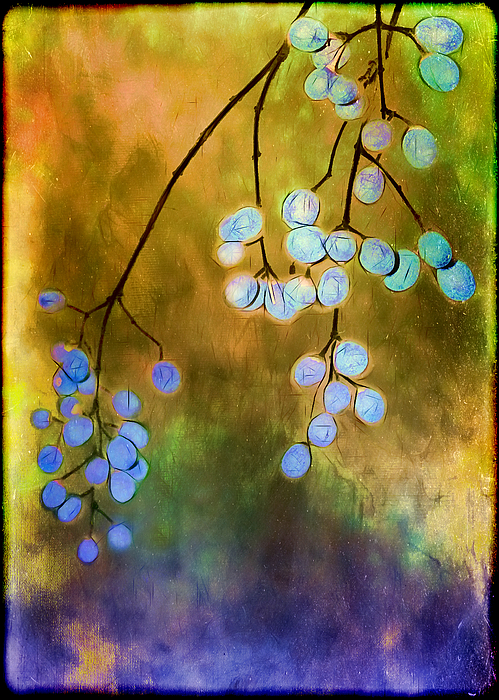 Berries Photograph - Blue Autumn Berries by Judi Bagwell