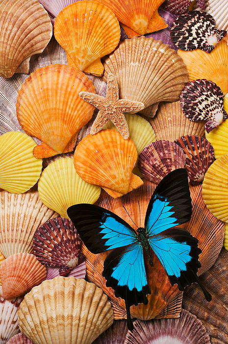 Blue Butterfly And Sea Shells Photograph