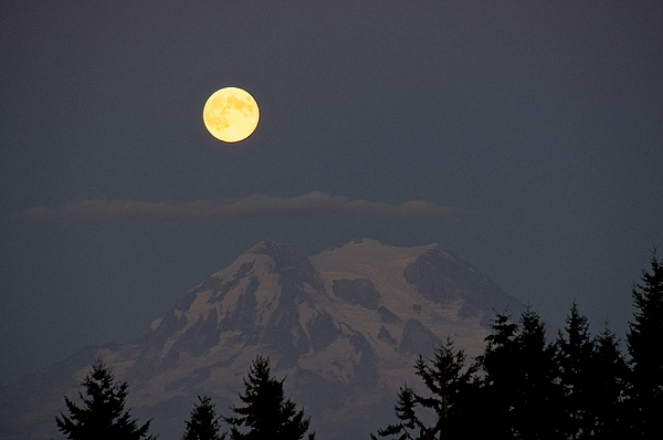 Photography Photograph - Blue Moon - Mount Rainier by Sean Griffin