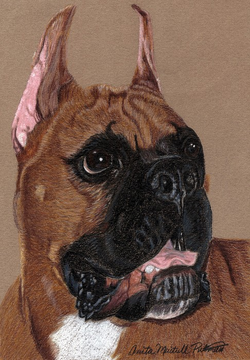 Dog Drawing - Boxer Vignette by Anita Putman