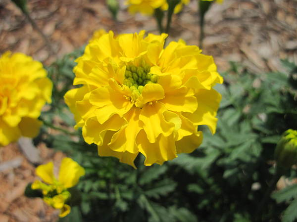 Yellow Flower Nature Bloom Photograph - Brite And Happy by Kyle Hughey