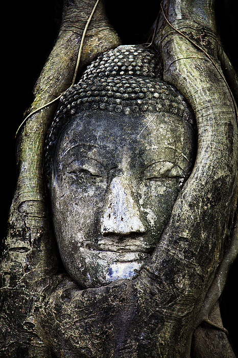 Ancient Photograph - Buddha Head In Banyan Tree by Adrian Evans