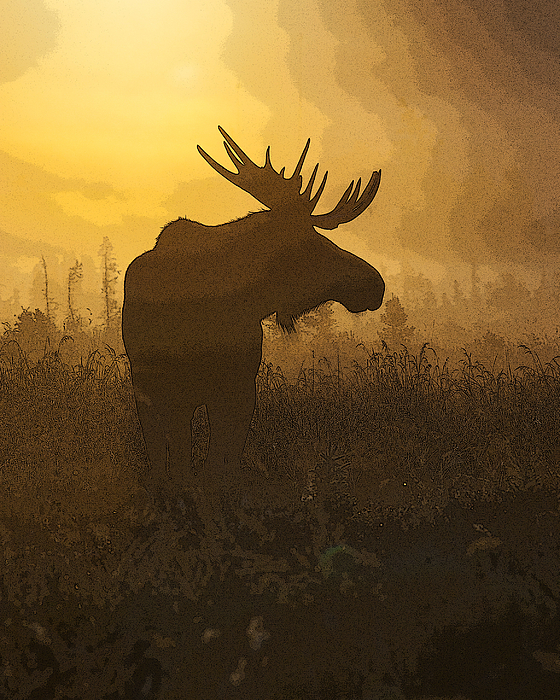 Abstract Digital Art - Bull Moose In Fog- Abstract by Tim Grams