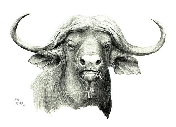 cape buffalo drawing by mary rogers. Black Bedroom Furniture Sets. Home Design Ideas