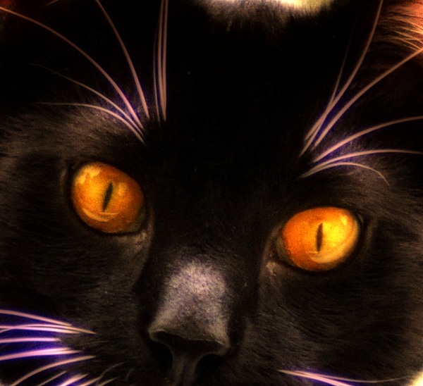 Cat Photograph - Cats Eyes by Bill Cannon