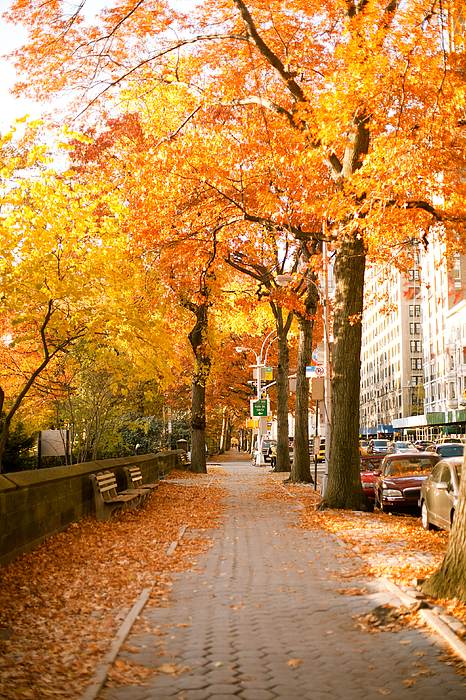 Yellow Leaves Photograph - Central Park West by Ariane Moshayedi