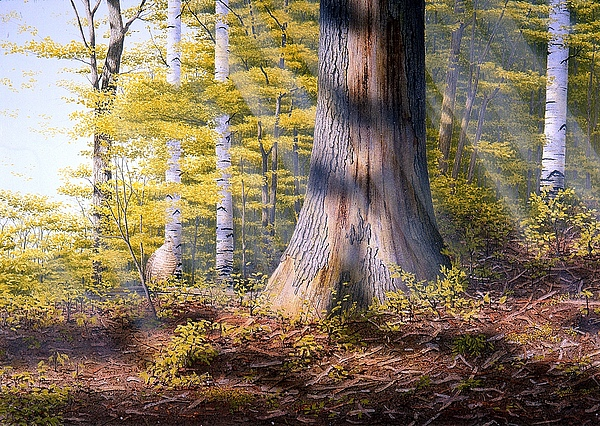 Woodland Painting - Colors Of Spring by Conrad Mieschke