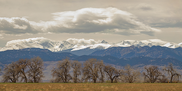 Cottonwood Trees Rocky Mountain View Photograph