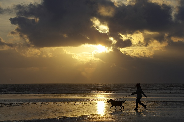 Animal Photograph - County Meath, Ireland Girl Walking Dog by Peter McCabe