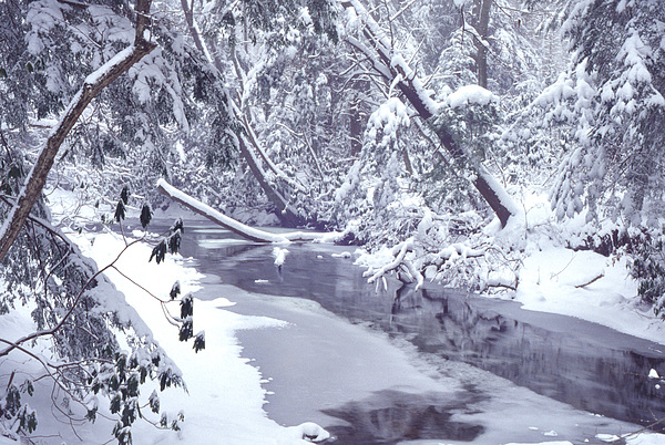 Usa Photograph - Cranberry River Winter Heavy Snow by Thomas R Fletcher